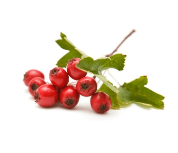 Hawthorn-berries PERFECT